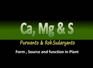 Ca, Mg dan S